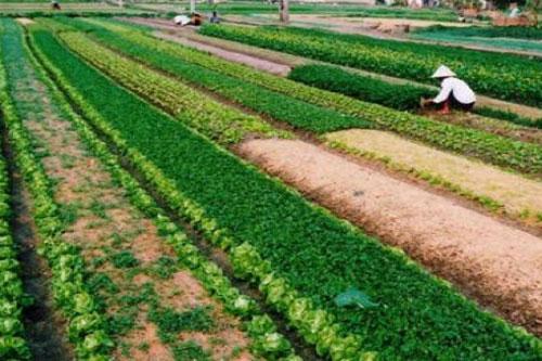 'Miễn thuế sử dụng đất nông nghiệp là chủ trương đầy tính nhân văn'